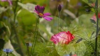 Watch Bee Gees Wildflower video