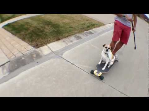 Milo dog longboarding