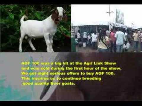 Alaminos Goat Farm Agri Link Show 2007