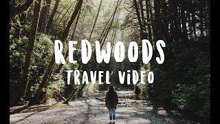 Redwoods National Park Travel Video ● Indigo Child Blog
