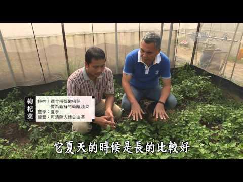 蔬果生活誌-20131207 友善農耕環保蔬食