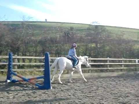 Horse Jumping With Kit Xxx video