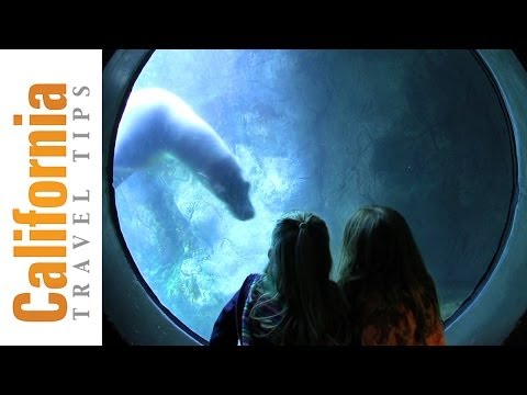 Aquarium of the Pacific - Long Beach Attractions - California Travel Tips