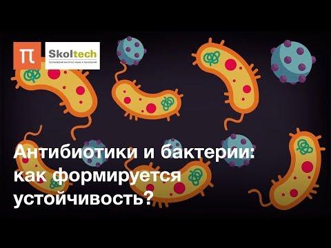 Антибиотики и бактерии: как формируется устойчивость thumbnail