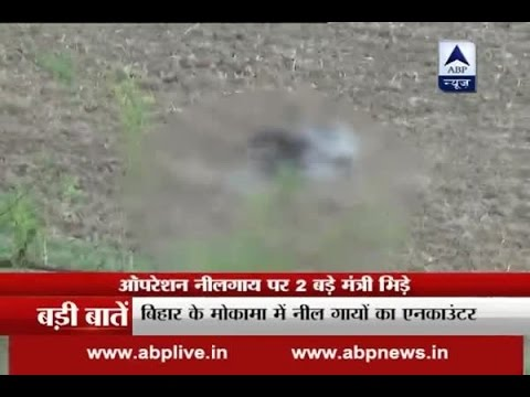 Operation 'Neelgaay': Maneka Gandhi Vs Prakash Javadekar on killing animals
