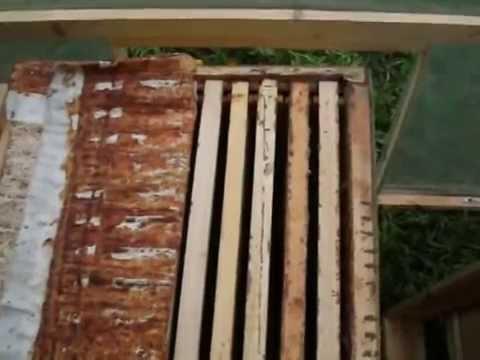 Пчеловодство. Роевой период. 8 признаков-примет (2,3,4,5)