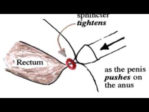 How to insert penis into rectum