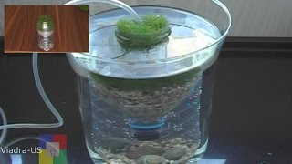DIY Aquarium filter : testing a prototype biofilter / Air Driven Filter #