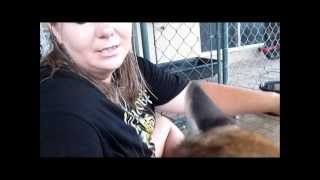Kisses from A Baby Florida Panther