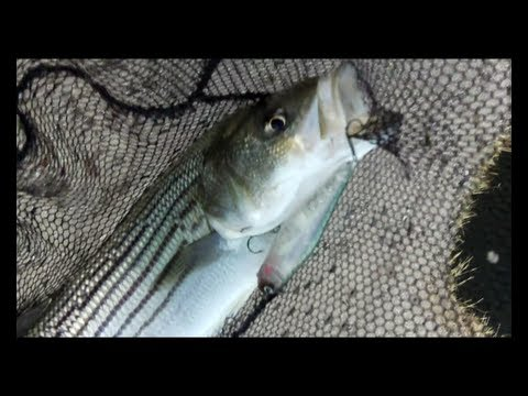 BEST Striped Bass Fishing Silverwood Reservoir California HD!
