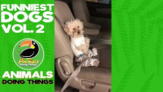 Funny Dogs Vol. 2 Compilation | Funniest Animals Doing Things