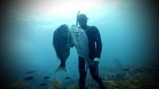 Spearfishing Snapper with Luke Potts