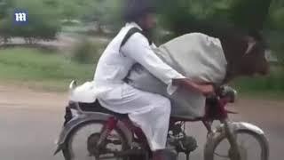 Thanh niên chở bò trên xe máy cực ngầu xôn xao dân mạng Bạn trẻ