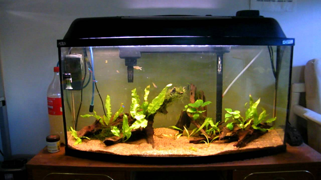 112 liter community tank youtube for Aquarium 80 litres