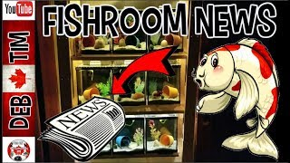 FISHROOM NEWS GROW OUTS, FRY BETTA AND SMUDGE!