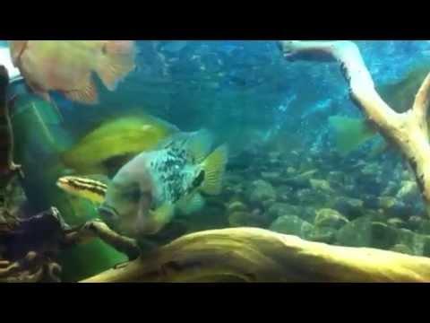 Sxsi Fish שי בכר video