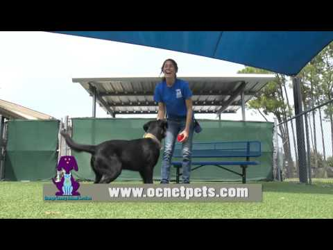 Orange County Animal Services - I Volunteer Because . . . Jenny M