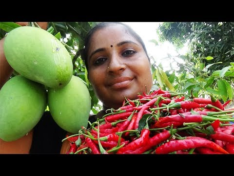 Organic Farm Fresh Mango Red Chilli Chutney Recipe Cooking In My Village | Mango Pickle | Sea Foods