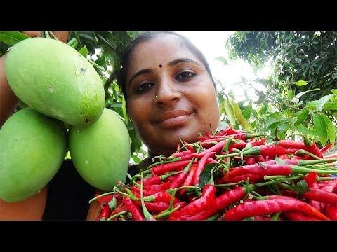 Organic Farm Fresh Mango Red Chilli Chutney Recipe Cooking In My Village | Mango Pickle | Sea Foods
