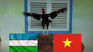 THẦN KÊ Dự Đoán Kết Quả Trận Đấu Giữa U23 Việt Nam - U23 Uzbekistan : Ai Sẽ Là Nhà Vô Địch