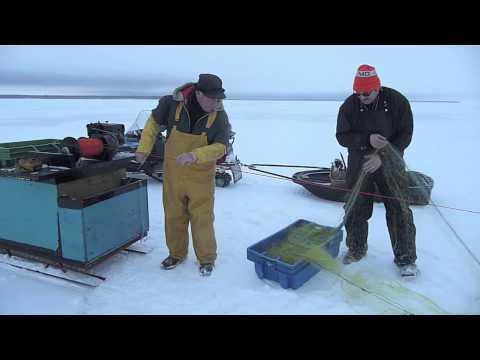 Lake winnipeg for Lake winnipeg ice fishing