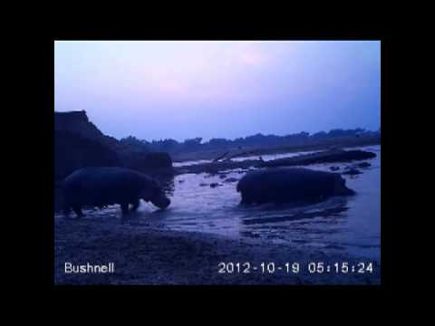 Camera Trap at the hippo hide