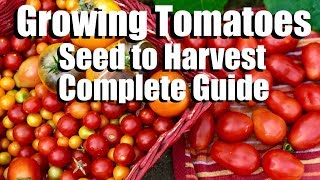 How to Grow Tomatoes from Seed to Harvest // Complete Gardening Guide with Digital Table of Contents