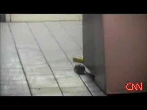 Rats at Taco Bell/KFC in NYC