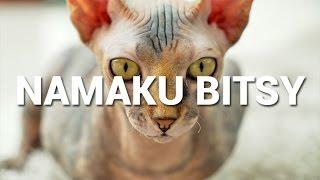 download lagu Namaku Bitsy gratis