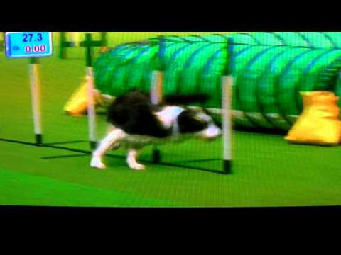 Crufts 2011 Large Agility Winner - Will Rolfe