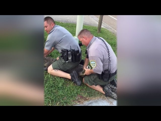 Watch Alligator Get Handcuffed By Authorities for Trespassing Into Home