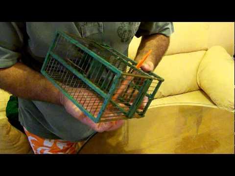 poner hilo de pesca en jaula by luismi_punta