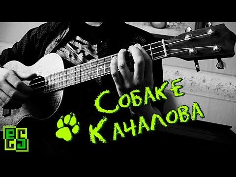 6 океанов - Собаке Качалова