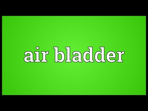 Header of air bladder