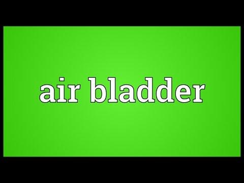 Header of air bladder
