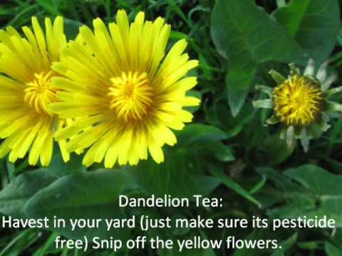 Dandelions - Friend. Foe. or FOOD ~ Lisa's Pine Notes