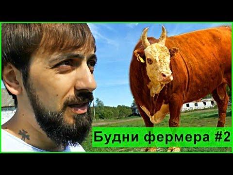 Будни фермера #2 Интервью у быков.Сельское хозяйство Мысля от Эдгара