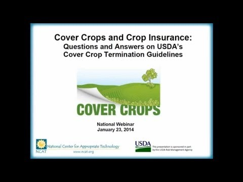 Cover Crops and Crop Insurance: Questions and Answers on USD