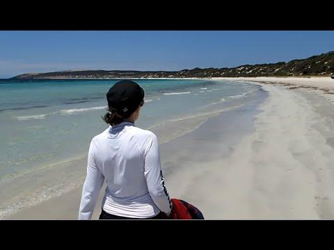 Kangaroo Island - Ferry, Emu Bay beach & Swim with Dolphins via Kangaroo Island Marine Adventures