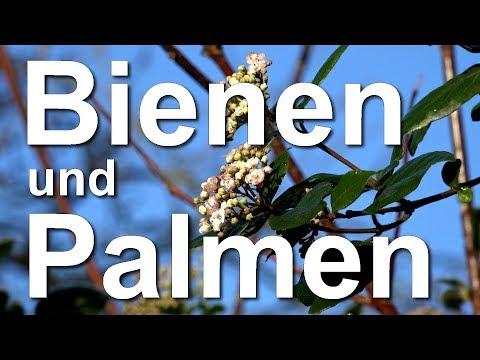 Rundgang Durch Den Garten - Bienen, Palmen, Exotische Und Heimische Gehölze In Mielkendorf