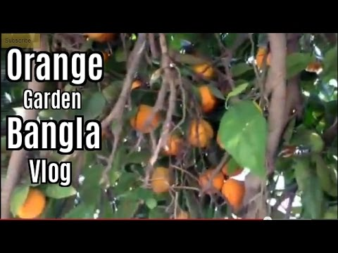 Bangla Video At The Park And Orange Garden For Bangladeshi video