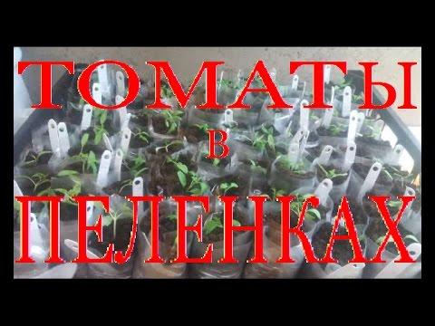 """ТОМАТЫ. №2. Рассада томатов в """"ПЕЛЕНКИ"""""""