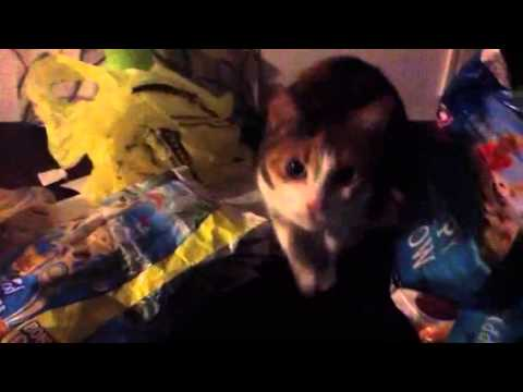 Cat tries to sneak food and gets busted lol