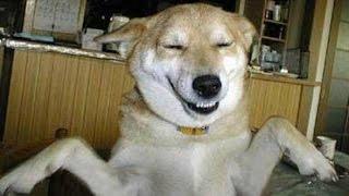 những giây phút cực kì hài hước của động vật - Funny Dogs