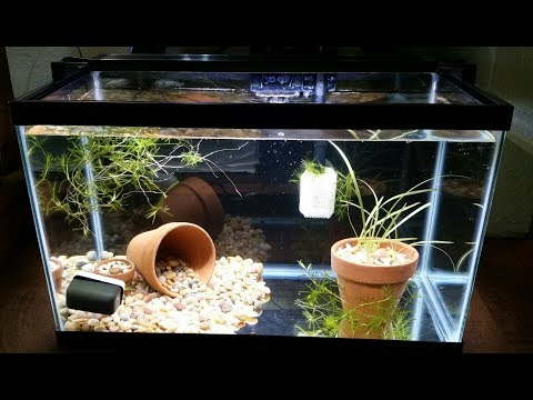 How To: Basic Aquarium Setup! Step-by-step, Easy, & Everything a (Small) Fish Needs!