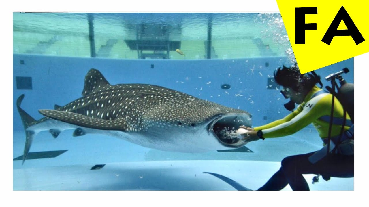 Top 10 biggest saltwater fish in the world youtube for Largest saltwater fish