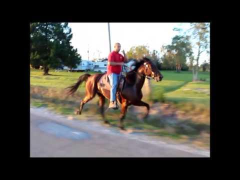 HOO-DOO SINGLE FOOTING HORSE