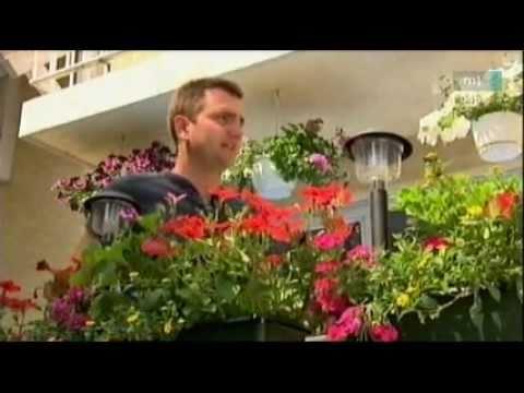 Színpompás virágok erkélyre, balkonokra