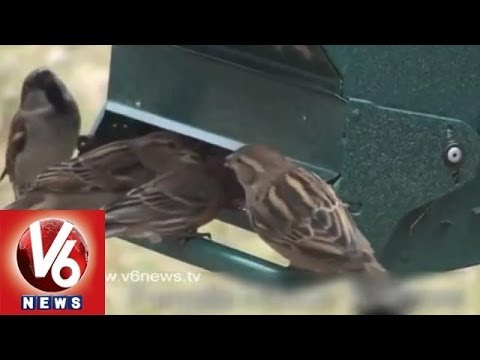 Save Sparrow Project in Visakhapatnam : Modern Technology Ruins Sparrows Life