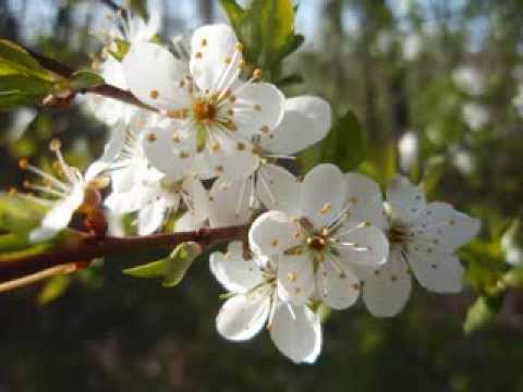 Antonio Vivaldi - Four Seasons - Spring (Allegro)